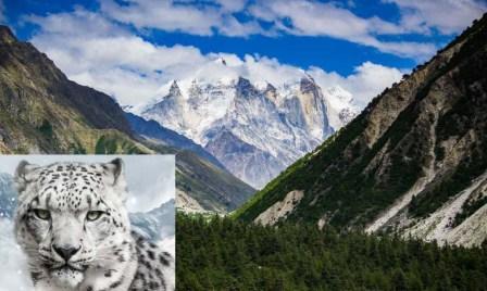 Gangotri National Park: गंगोत्री नेशनल पार्क में हिम तेंदुए की मौत