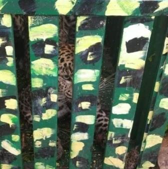 tehri: आतंक का पर्याय बना गुलदार पिंजरे में हुआ कैद