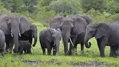 जब जल निगम के स्टोर में हाथियों के झुंड ने बोला धावा
