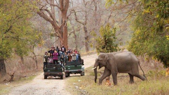 Rajaji Tiger Reserve Park: सैलानियों के लिए 15 नवंबर से खुलेगा राजाजी टाइगर रिजर्व पार्क