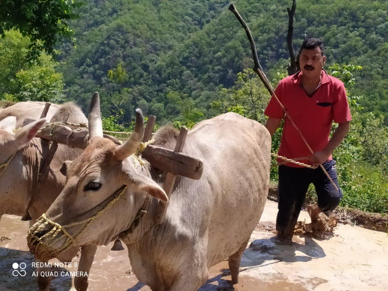 चुनाव नजदीक आते देख नौटंकी करने वाले नेताओं को खेती कार्य को करवाएंगे मजबूरः दिनेश धनै