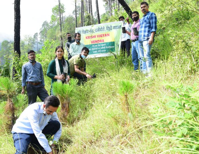 हरेला पर्वः वानिकी महाविद्यालय रानीचौरी में किया गया विभिन्न प्रजातियों का वृक्षारोपण